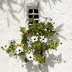 Special Gardening Creativity - Instantly Adorable African Daisies on a Stucco Wall by Georgia Mizuleva