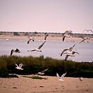 the seagulls dance by TessAndre