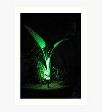 Green at night Art Print