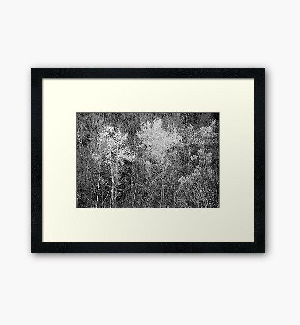 Foliage Keene Valley, NY by John Schneider