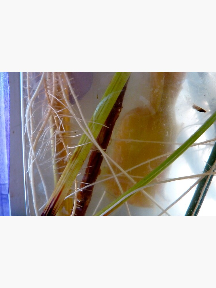 Rooting by LynnWiles