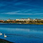 Maraket Commons and two swans by TJ Baccari Photography