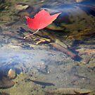Leaf on the Pond by Lynn Wiles