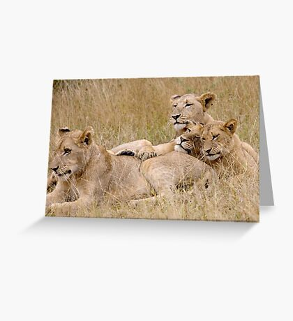 Lion Pride Reunion Greeting Card