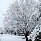 Snowy Tree by Colleen Drew