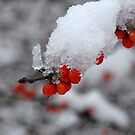 Encased in Snow by Colleen Drew