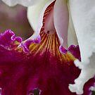 Orchid Ruffle by Deborah  Benoit