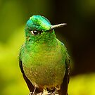 Long-tailed Sylph Portrait by Digitalbcon