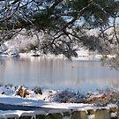 Southern 'Snow Blizzard' by jaschild