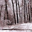 Hoar Frost by Ruth Palmer