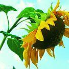 a bright sunny day by ANNABEL   S. ALENTON