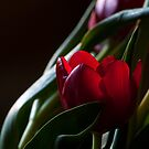 First Love... by GerryMac