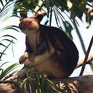 Tree Kangaroo by bero84