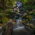 Cascading Sunshine by Daniel Berends