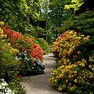 Azalea walk, Castle Drogo, Drewsteignton by BronReid