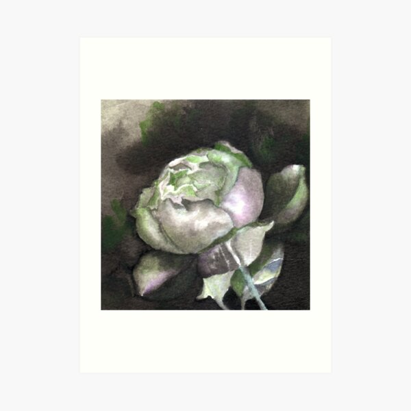 Rose bud in green Art Print