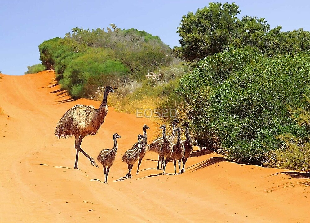 Emu Family  by EOS20