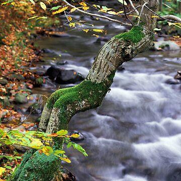 autumn poem by zadiraka