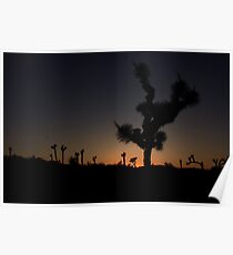 Joshua Trees in silhouette Poster