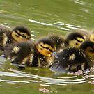 Little Ducklings Happy Together by ienemien