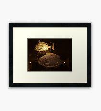 Aladdin's Cave (4) Framed Print