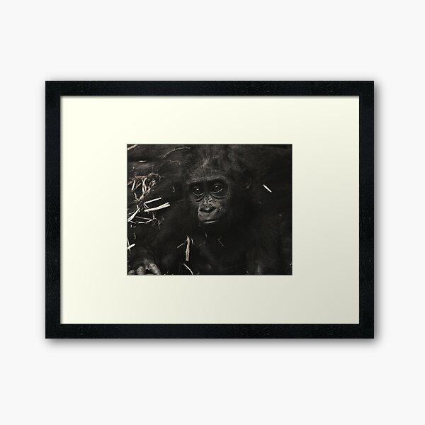 West Lowland Gorilla Baby Framed Art Print