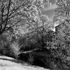 River Bank by Mark Bangert