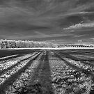 Felder SW von Mark Bangert
