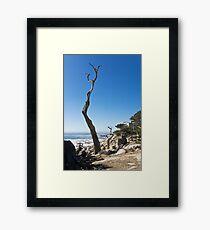 Dead Tree Framed Print