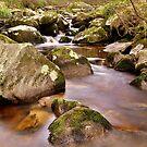 Woodland Stream at Glencree co, Wicklow. #2 by Finbarr Reilly