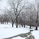 Snowy Stream by Colleen Drew