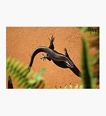 African Striped Skink (Trachylepsis striata) Photographic Print
