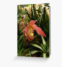 Phragmipedium Franz Glanz Greeting Card