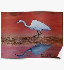 White Egret Wading In The Sunset Poster