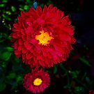 The Red Flower by Mikhail Zhirnov