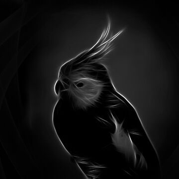 cockatiel - black white by hottehue
