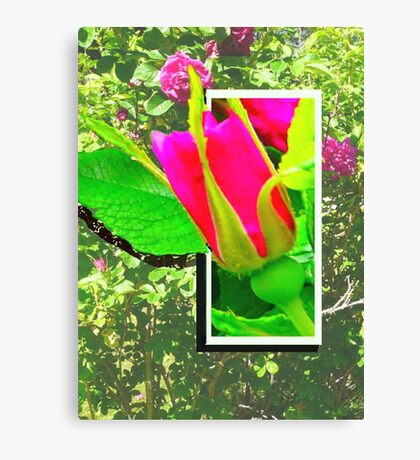Rose Bud, Don't Fence Me In Canvas Print