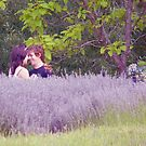 Love in the Lavender by Meg Hart
