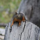 Squirrel  by Tori Snow