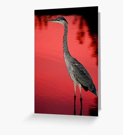 Blue Heron at Sunset Greeting Card