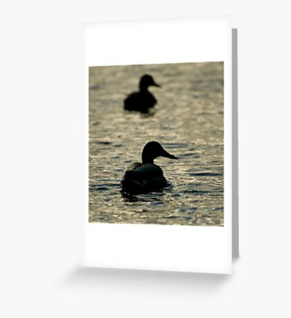 Ducks Away  Greeting Card