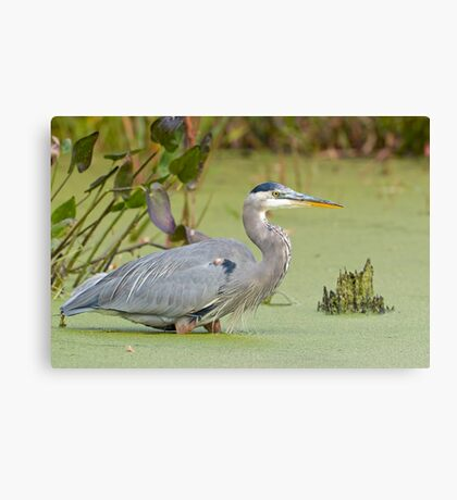 Walk in the Pond Canvas Print