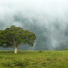Tree by Margaret Stockdale