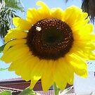 Sunflower by AmandaWitt