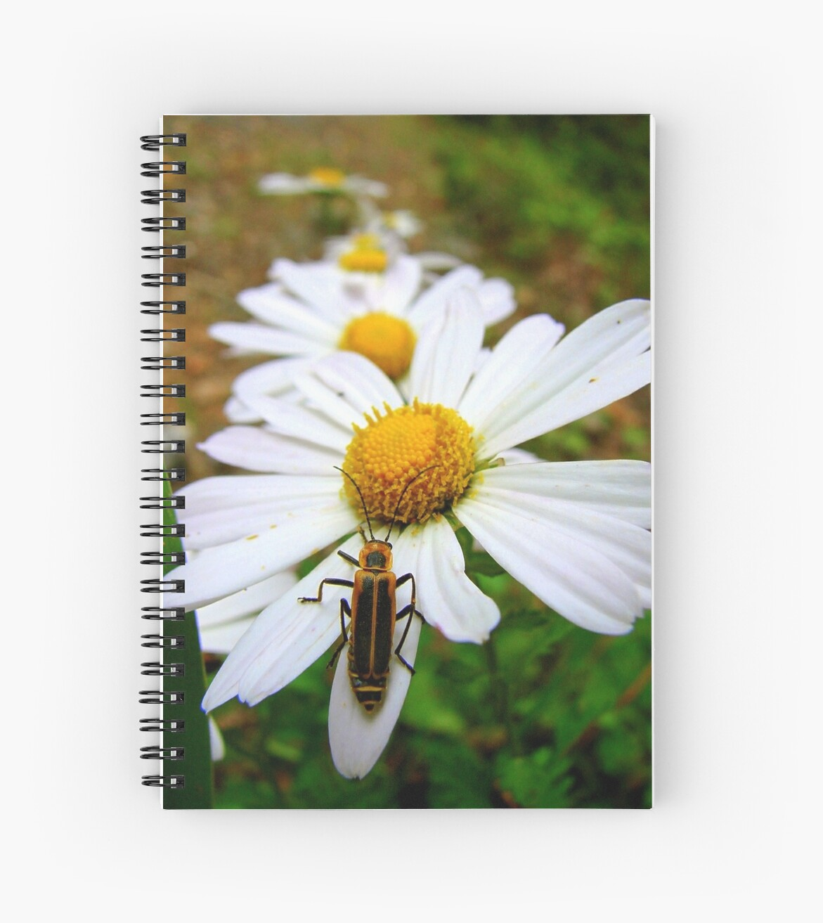 Marguerite Daisies and a Margined Leatherwing  by Jean Gregory  Evans