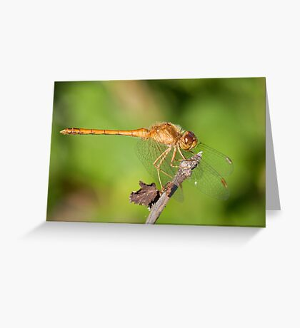 Sweet Dragonfly Greeting Card