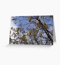 Catkins Blossom Greeting Card