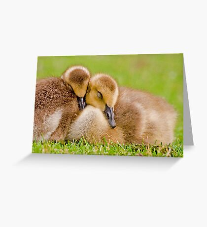 Cuddling Goslings  Greeting Card