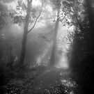 Misty Morning Hike, Mount Davidson by Richard Mason