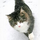 Harry in the snow by Lynne Prestebak